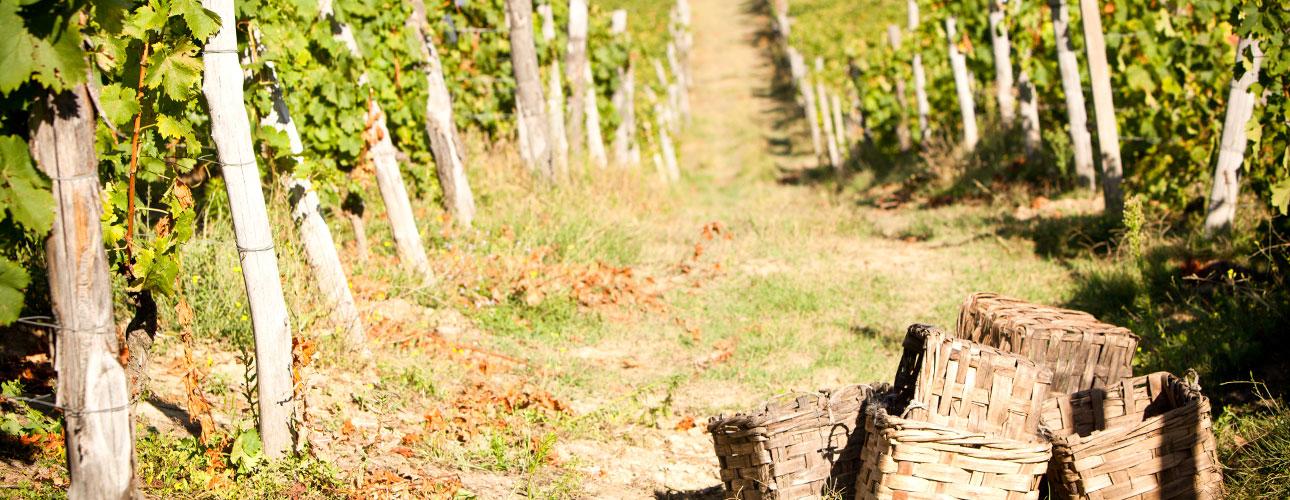 Musująca strona Piemontu