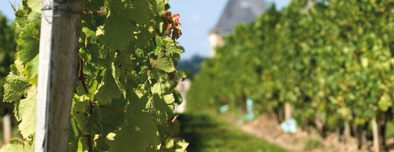 Małe - Wielkie Bordeaux